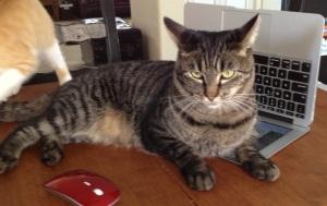 Nallo doesn't care when my deadline is. He wants tuna, stat.